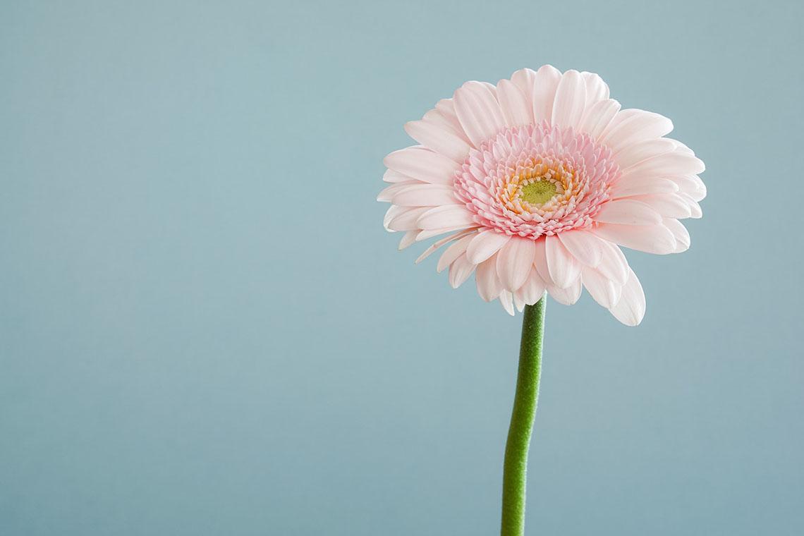 flower - The Basics of The Fertility Awareness Method