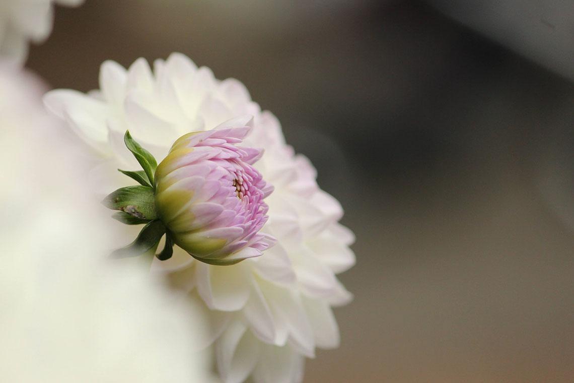 flower bud - Postpartum Care for Increasing Vitality