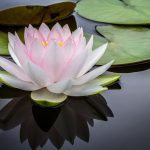 lily pad - Pelvic Floor Function and Preparing for Birth