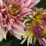 Flowers - Sleep Soundly: Tips for Sleep Hygiene and Better Rest