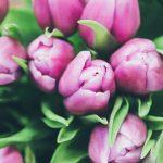 rose buds - Slow Medicine: How long do I need treatment?
