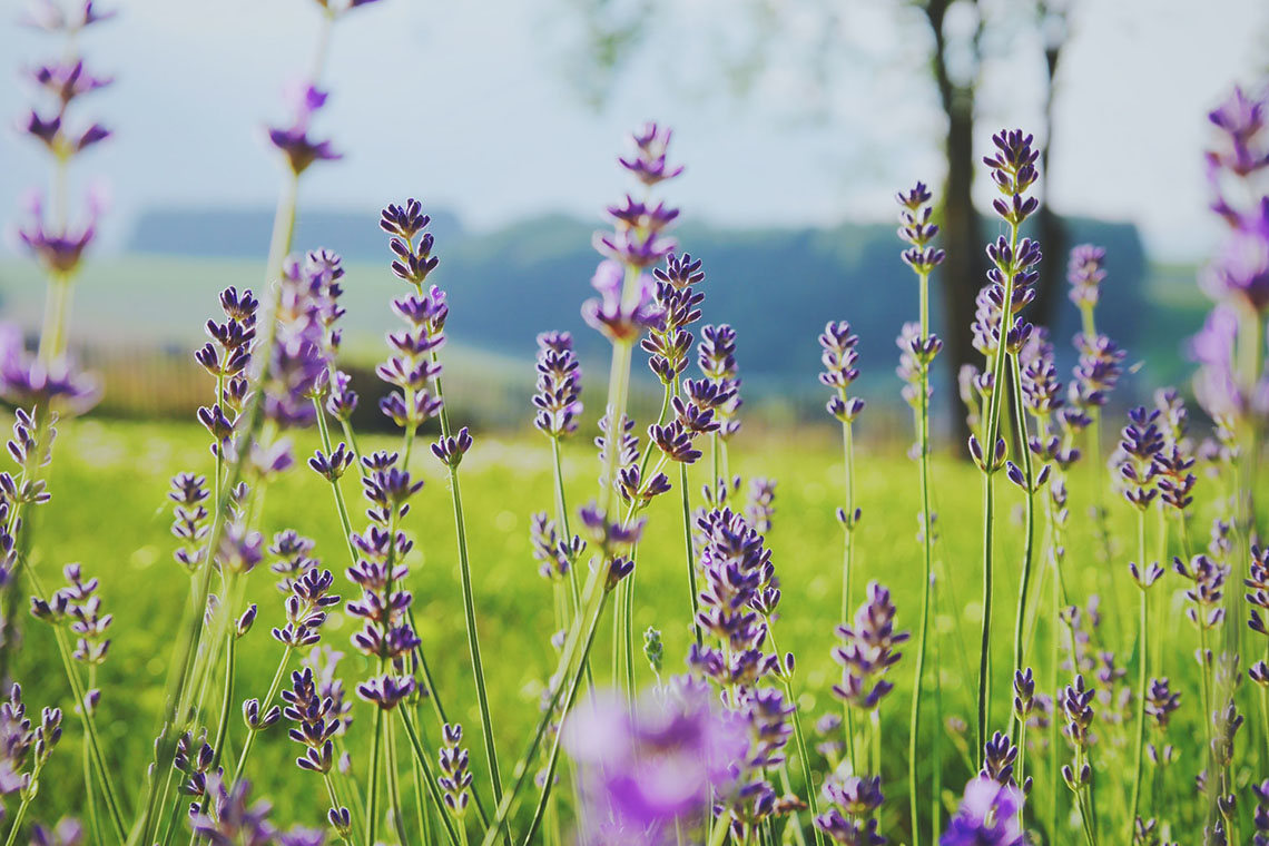 flower field - Creating Space for the Postpartum Period